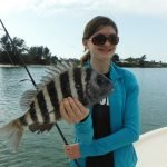 Sheepshead showing up in Sarasota