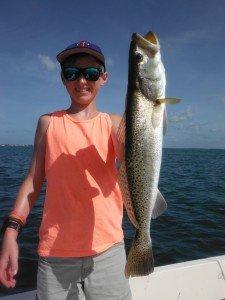 Sarasota trout
