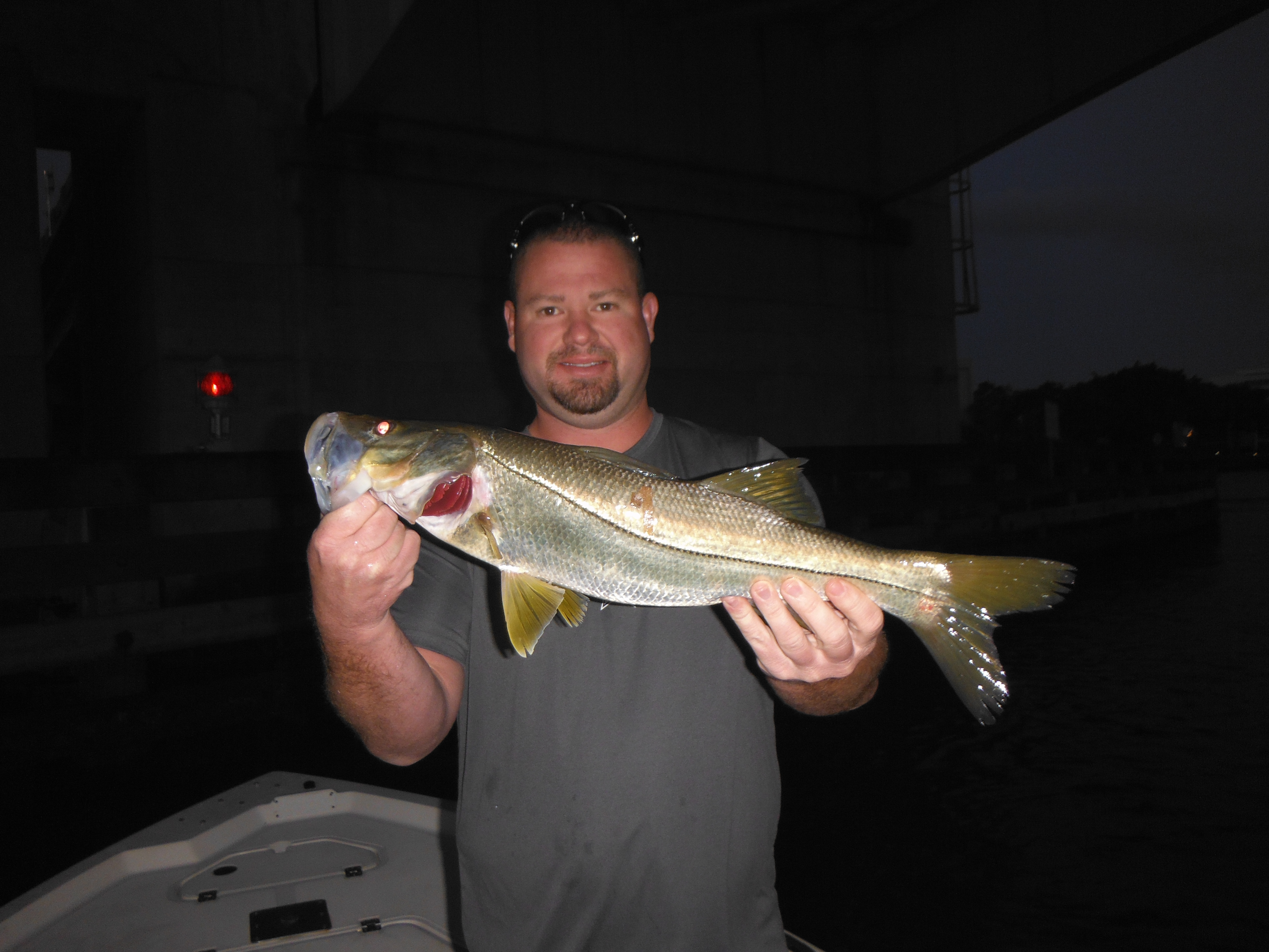 Sarasota fishing report fishing siesta key florida for Plenty of fish florida