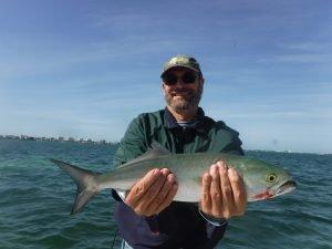 Siesta Key bluefish