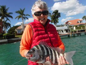 Siesta Key sheepshead