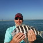 Siesta Key sheepshead continue to please clients