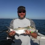 Surface action pleases clients on Siesta Key fishing charters
