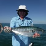 Fantastic false albacore fishing in Sarasota!