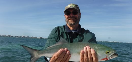 Siesta Key bluefish
