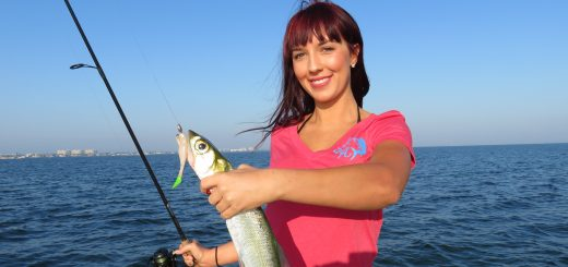 Siesta Key fishing report