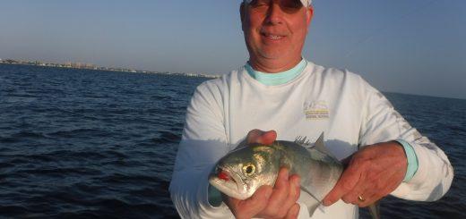 Siesta Key fishig report