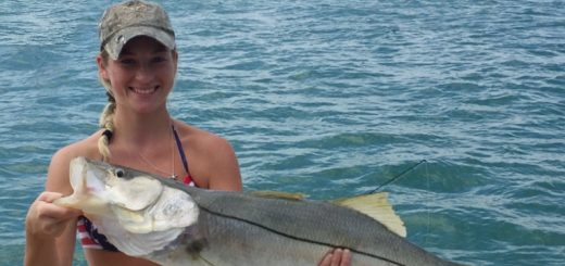 Sarasota Key snook fishing