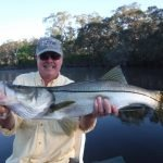 Big snook caught on a Sarasota river fishing charter!