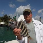 Strong sheepshead fishing in Sarasota and Siesta Key