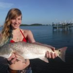 Using live bait on Siesta Key fishing charters