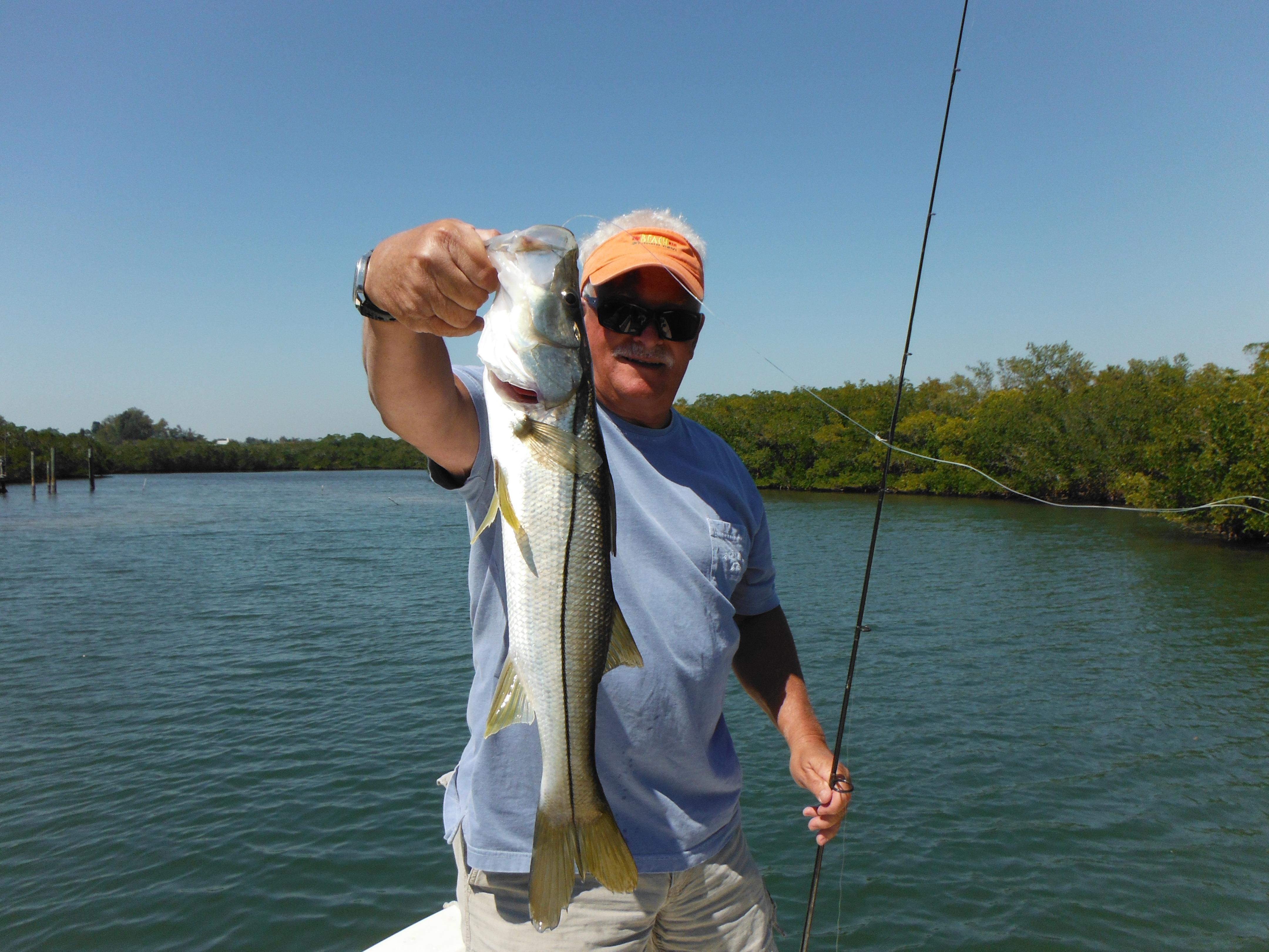 Sarasota snook fishing