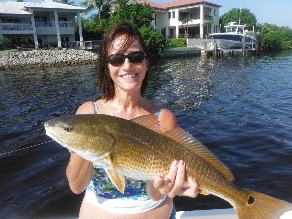 redfish fishing Siesta Key