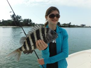 Siesta Key sheepshead fishing