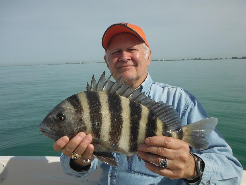 Siesta Key sheepshead fishing